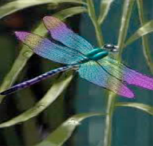 Embrace change and be like the dragonfly ready for its first flight.